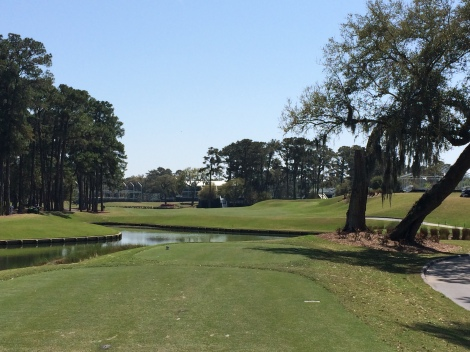 The 16th hole from the tee. An example of Pete Dye disguising the wide landing area with trees on the left and large mounding on the right.